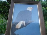 Picture Bail Eagle 5x8 frame in Fort Campbell, Kentucky